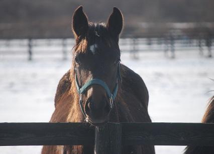 1・牝馬・星ピサ