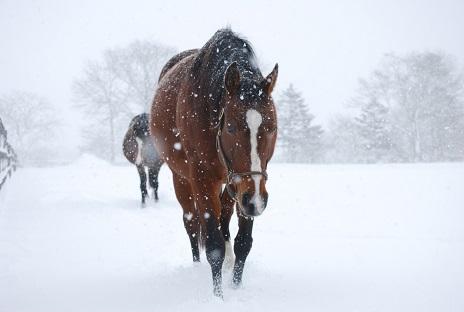 2・雪・シルエット