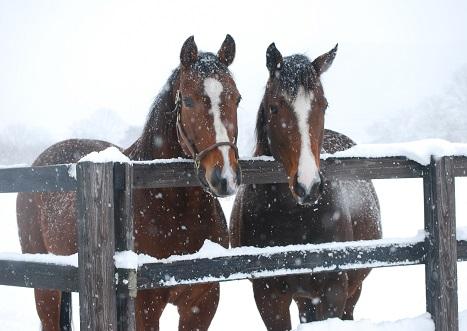 2・雪・シルとリアル