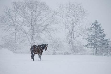 2・雪・雪の中のシルエット