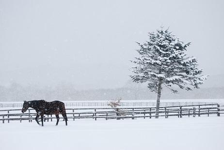 2・雪・木と馬