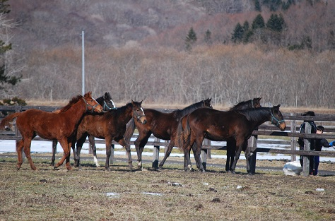 2・休日・1歳牝馬