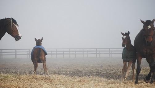 3・霧・怒ってる