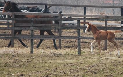 3・放牧地・隣の馬に