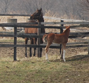3・放牧地・隣の馬に2