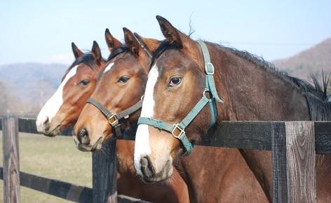 4・牡・生産牡馬