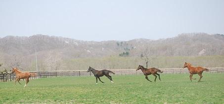 4・1歳・牝馬グループ