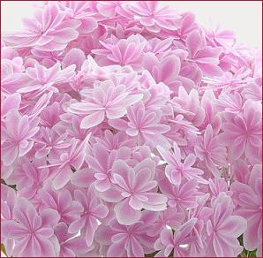万華鏡ピンク