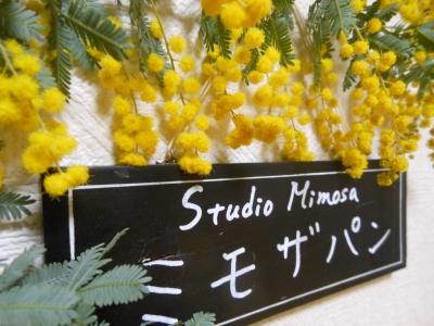 P_studiomimosa.jpg
