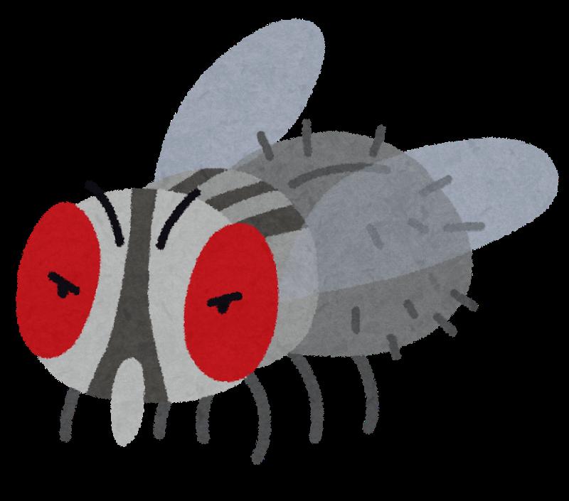 bug_hae.png