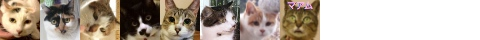 150403cats-s