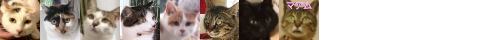 150429cats-s