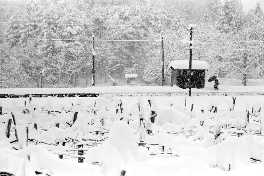 蒲原鉄道 高松 傘1 1983年2月 16bitAdobeRGB原版 take1b