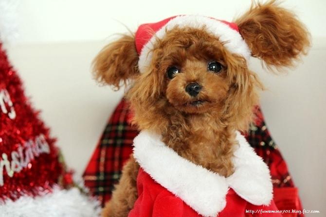 みるくクリスマス☆