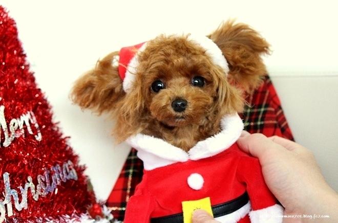 みるくクリスマス♪