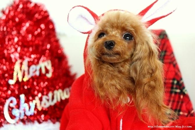 モコクリスマス☆