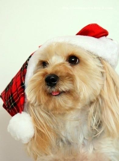 エル☆クリスマス♪♪