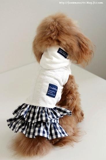チビプードルモコの毎日☆モコお洋服1