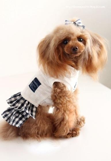 チビプードルモコの毎日☆モコお洋服