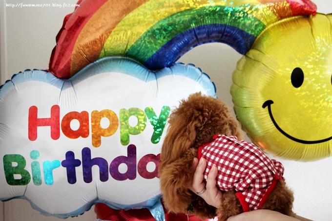 チビプードルモコの毎日☆みるくお誕生日