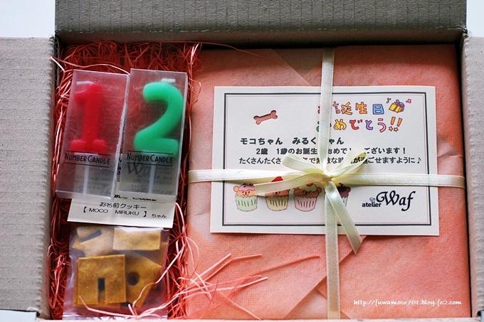 チビプードルモコの毎日☆モコみるくケーキC