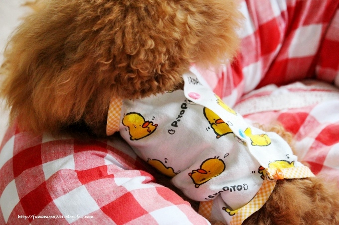 チビプードル☆モコの毎日 みるく術後服