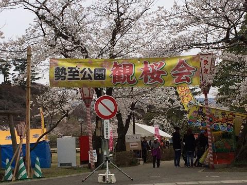 30勢至観桜会