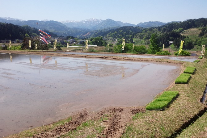 2015.05みのり棚田の学校
