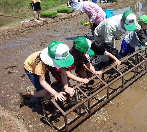 2015.05みのり棚田の学校2