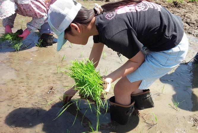 2015.05みのり棚田の学校3