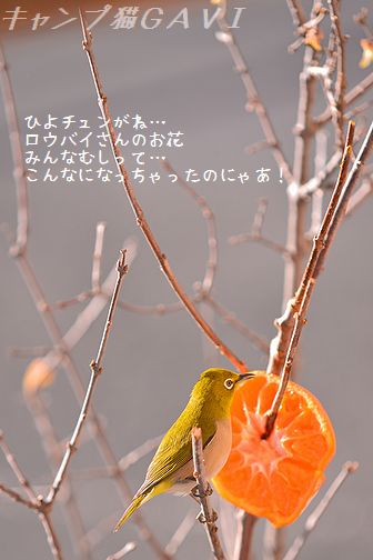 150201_5771a.jpg