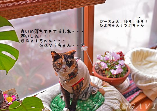 150209_6020a.jpg
