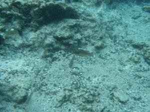 水中カメラ (265)