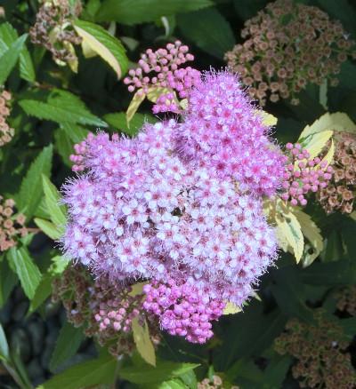 150616-花と土-1
