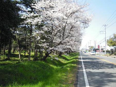 DSCN沼津千本松通り5848