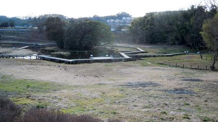 厳島湿生公園150119