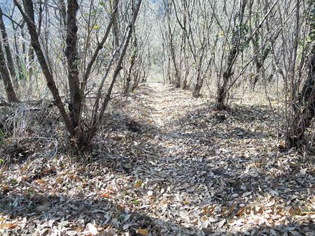枯葉がいっぱいの道