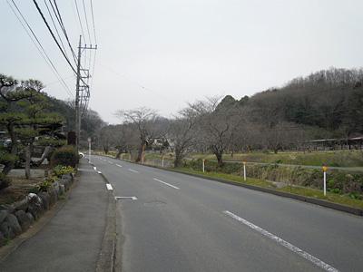 藤沢川沿い