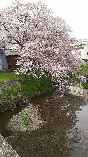 ninomiyadokoka-DCIM0001.jpg