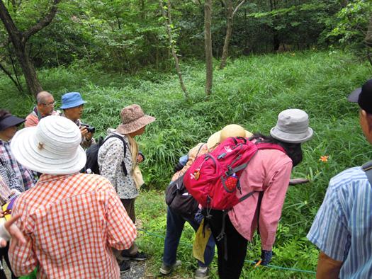 ノカンゾウを観察する参加者。