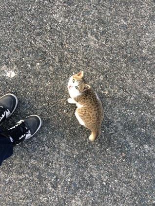 秋穂漁港のネコ (2)
