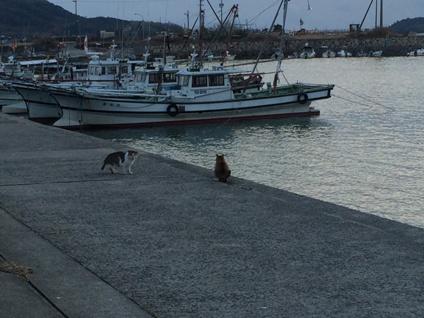 秋穂漁港のネコ (5)