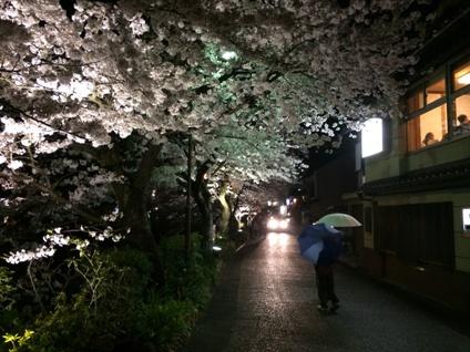 桜2015 (4)