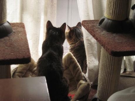 外を眺めるふたり