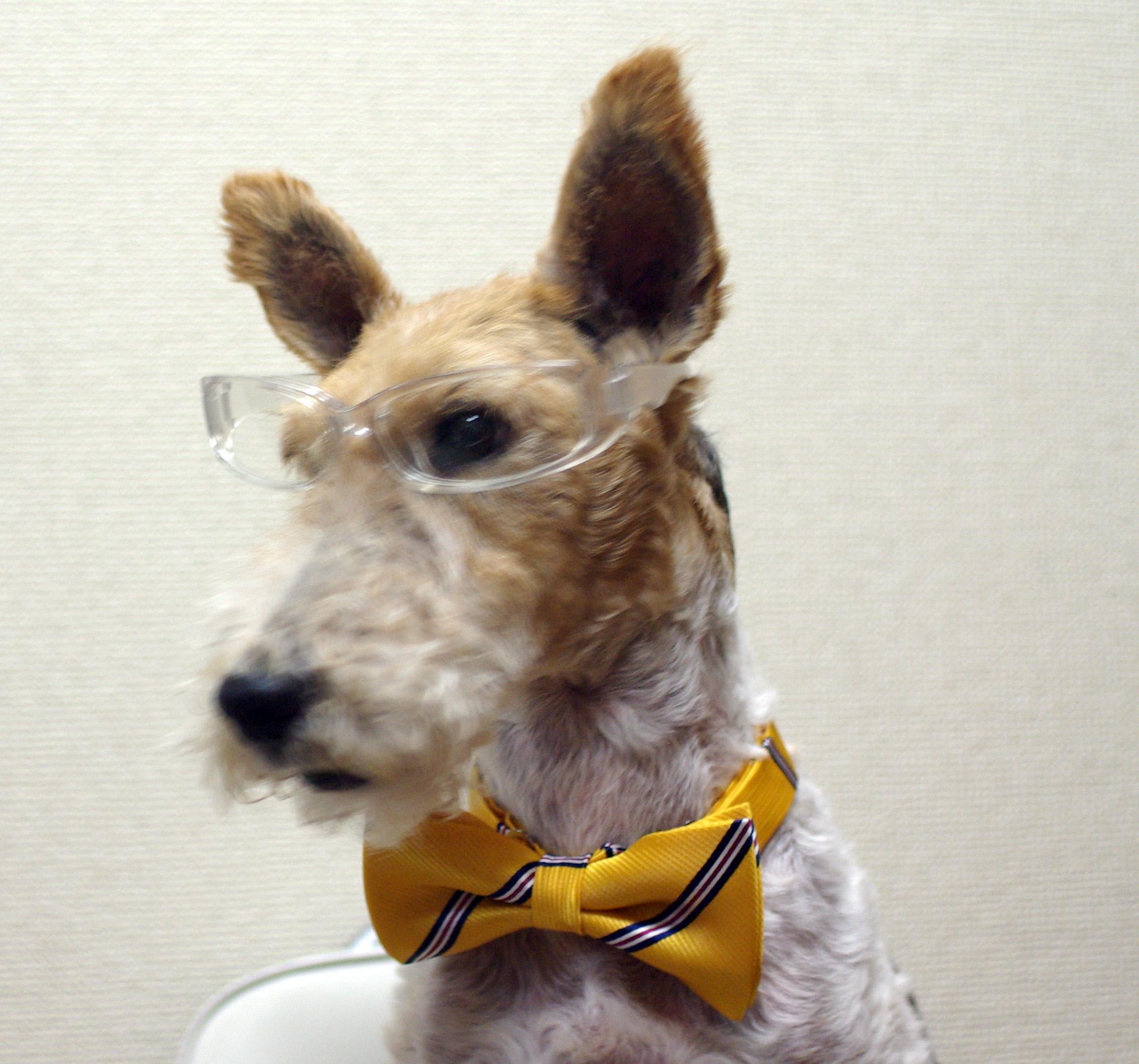 黄色ネクタイ