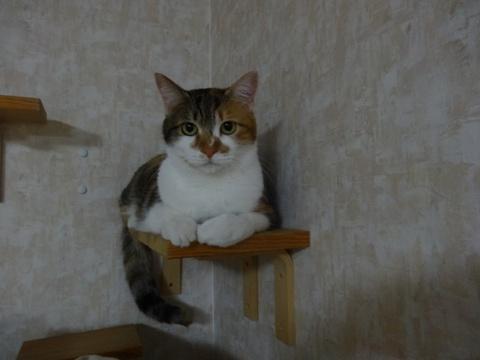 撫子さん(2014.12.09)