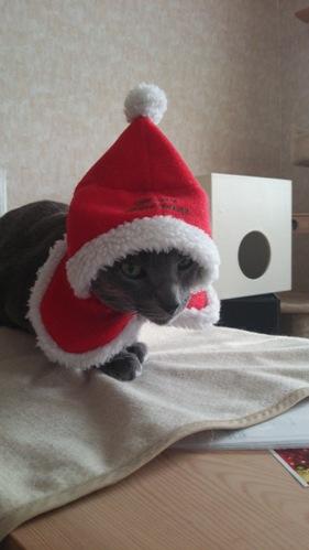 今年も元気にクリスマス♪02(2014.12.23)