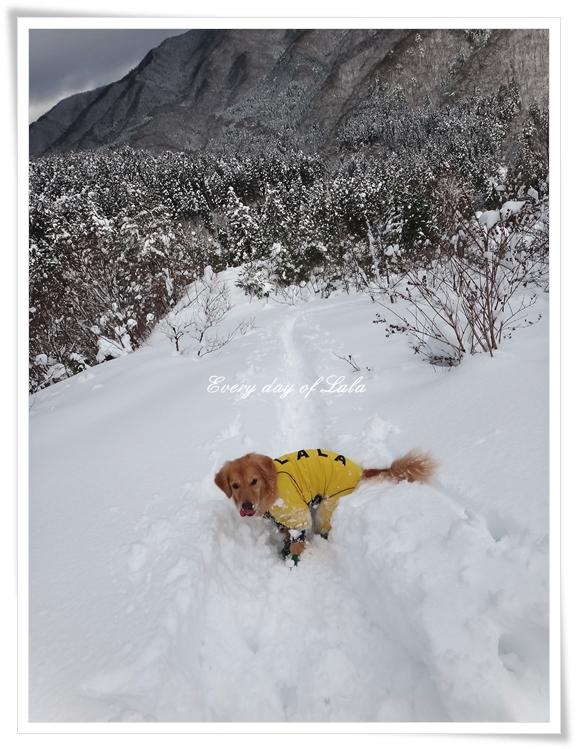 雪山登山201501