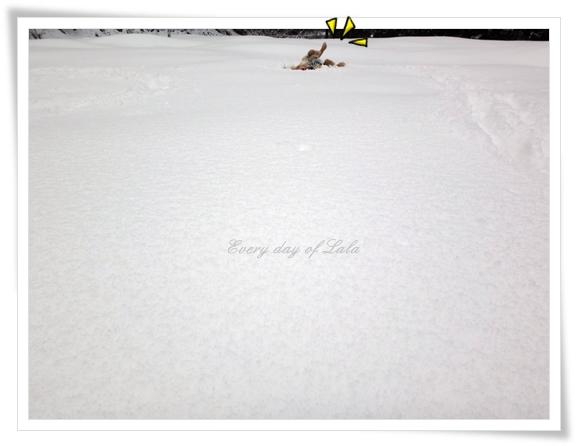 雪山へ201502