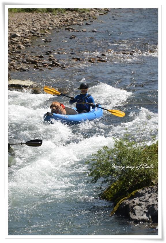 津保川の瀬へ201505